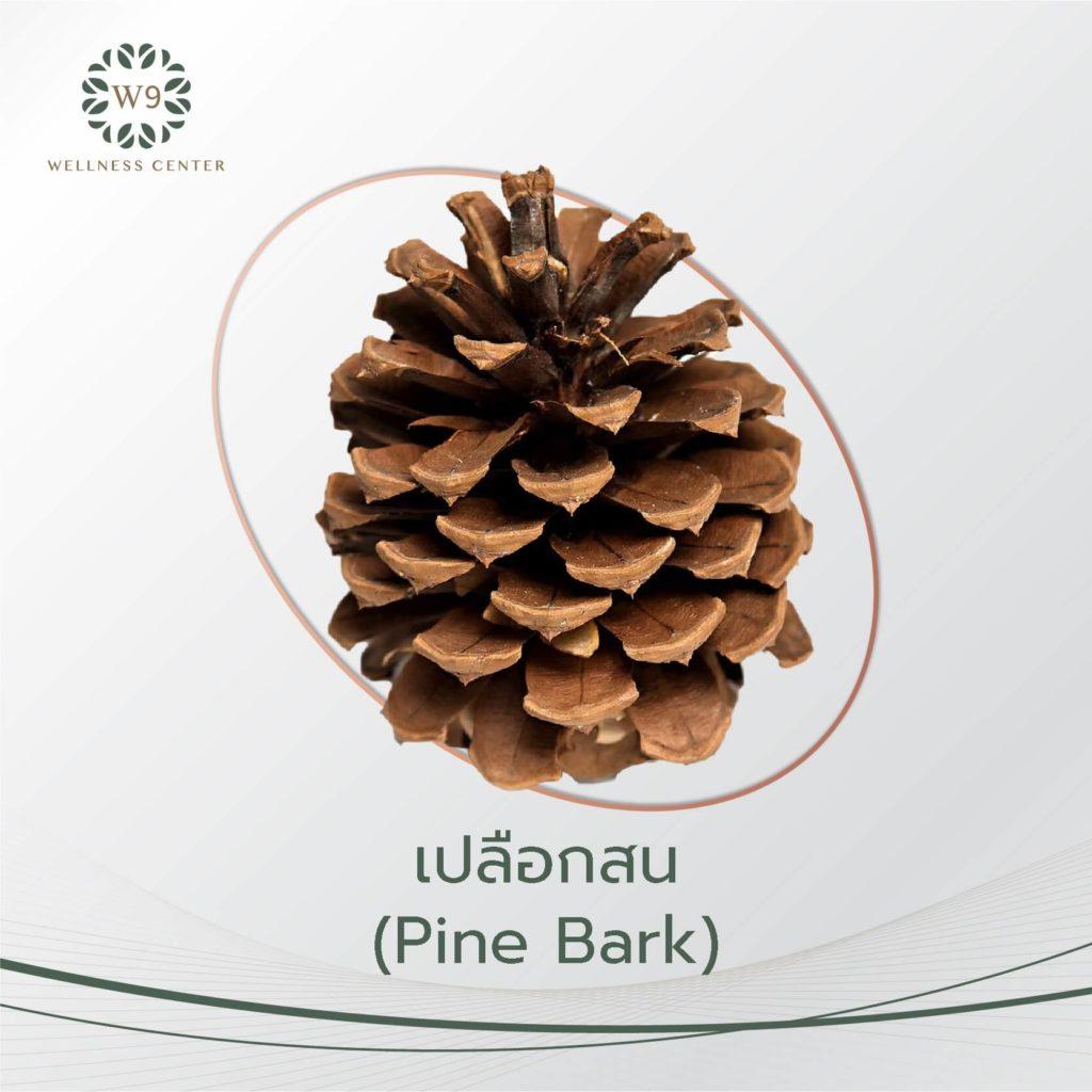 เปลือกสน (Pine Bark)